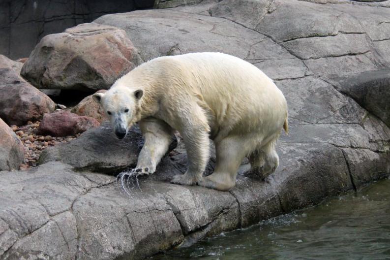 Aalborg Zoo rabat neger pige