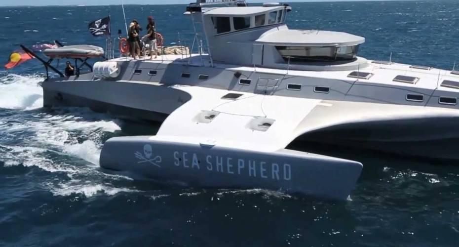 Brigitte Bardot, Sea Shepherd