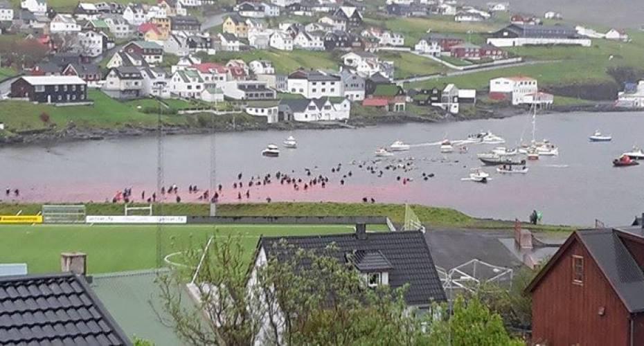 Grindefangst, Vágar, Færøerne
