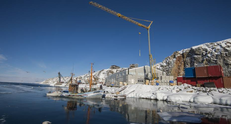 Halibut Greenland