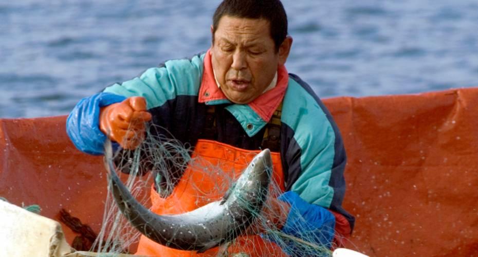Laksefiskeri