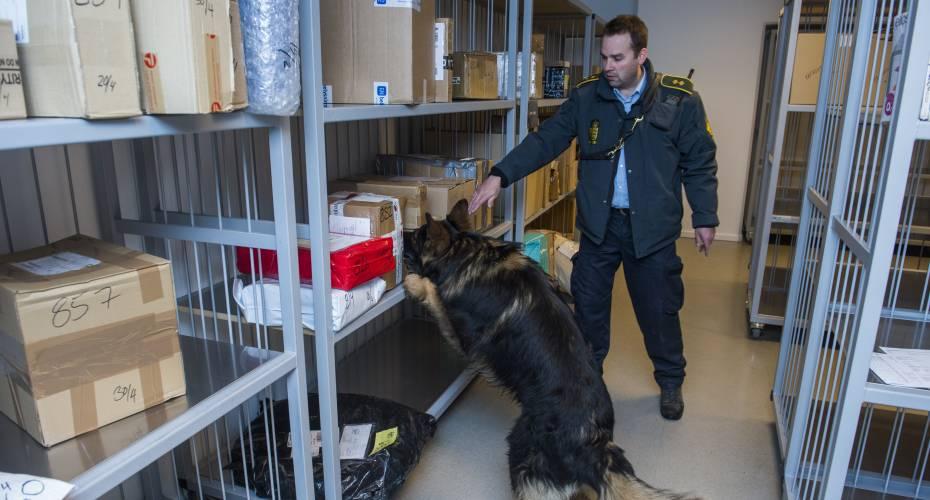 Politihund hashund